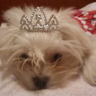 """dog 2) """"Mademoiselle Lilley"""""""