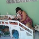 dog Lolly, Lilly, Thor, Duck, Tchai, Pitty