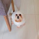 dog Tatielly Almeida